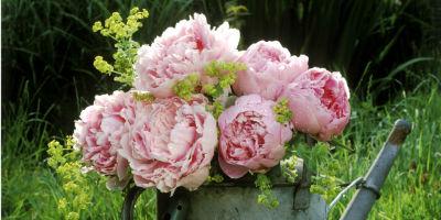 Flowers, florist, dundas, peonies
