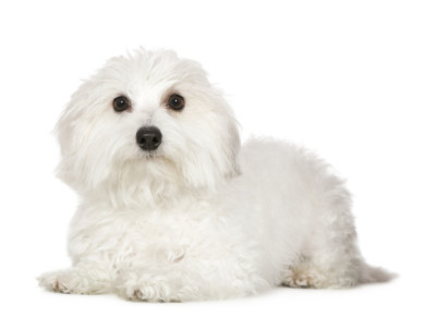 Top Dog Breeds for Allergy Sufferers