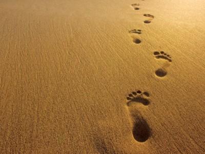 The Footprint we Leave Behind