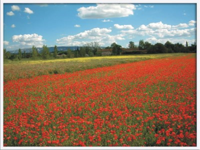 About the Poppies