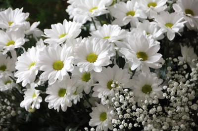 Pushing Up Daisies. Francine Houston, Transition Coach and End of Life Advocate