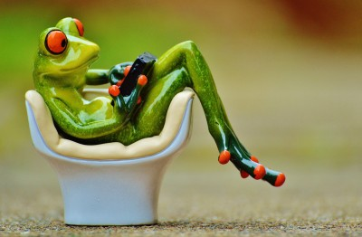 frogs, shop at home, online, 365