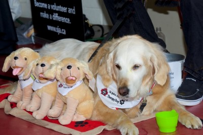 Therapy Dogs St. John Ambulance retirement residences seniors patients hospitals school children university students