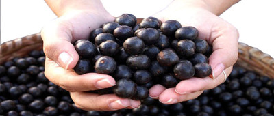 Importance of Acai Berries