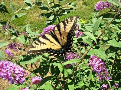 Urquhart Butterfly Garden – A Treasure in the Valley