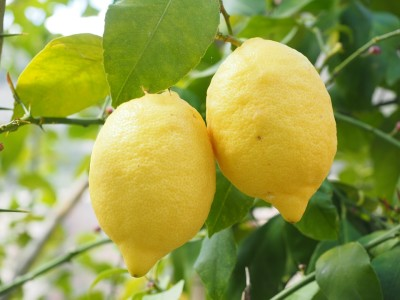 Can Lemon Cleanse Your Body?