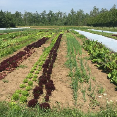 seasonal, local, farm