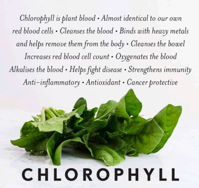 chlorophyll description healty