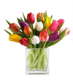 Mixed Coloured Tulips For Mother's Day By Brant Florist