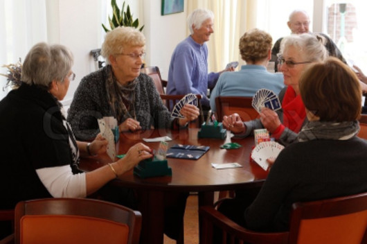 people playing cards, seniors at cards