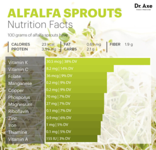 Know More on Alfalfa Sprouts
