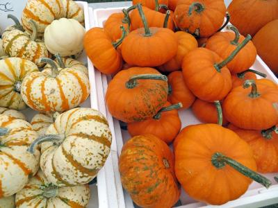 pumpkin fresh pumkin vegetable