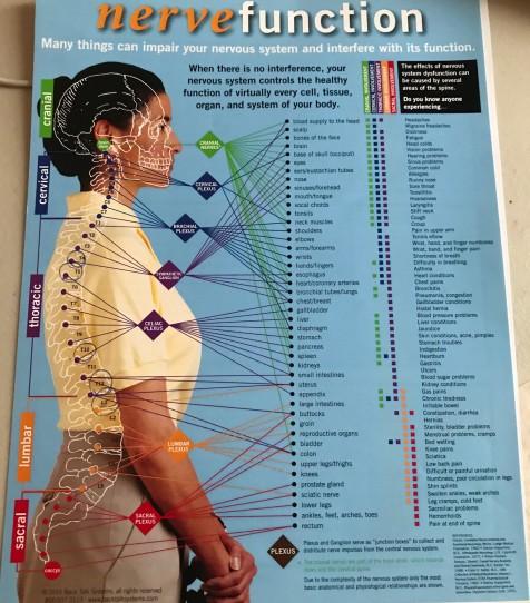 vertebrea, organs, function, nerve function