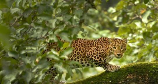 Tadoba Animal sightings | Tadoba National Park
