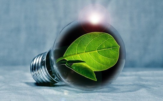 light bulb with leaf, tiny home movement