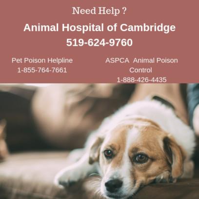 Animal Hospital of Cambridge, Pet Poison Hotline, ASPCA