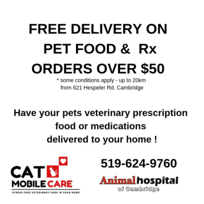 animal hospital of cambridge Cat Friendly Practice