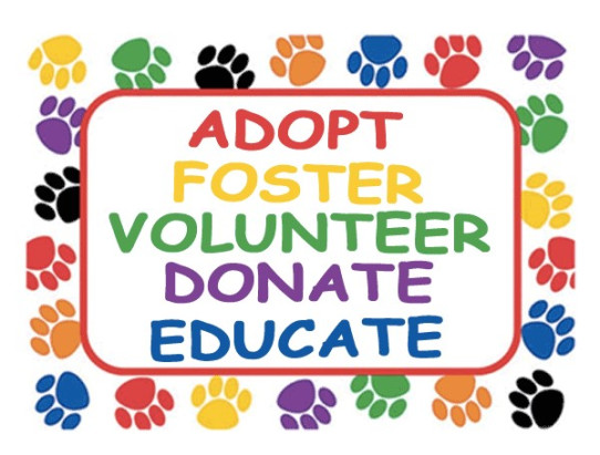 Adopt, foster, volunteer, donate, educate, rescue dogs match