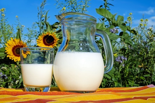 milk nutrients vitamins calcium bones healthy seniors meals cooking