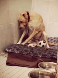 Lana the Saddest Dog in the World is Sad Again