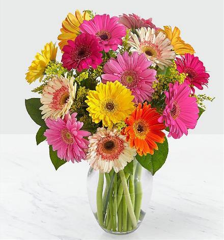 Brant Florist, Burlington, Burlington Florist, Gerberas