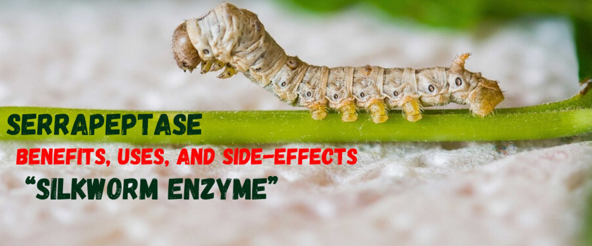 Serrapeptase Benefits Uses And Side Effects Of The Silkworm Enzyme Weight Loss Immune Boosting Health Blogs