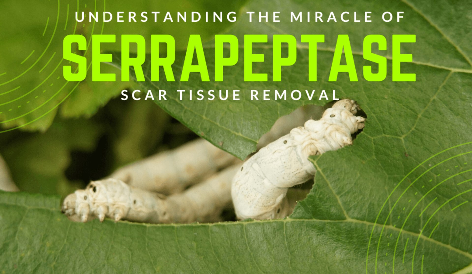 Understanding The Miracle Of Serrapeptase Scar Tissue Removal Weight Loss Immune Boosting Health Blogs