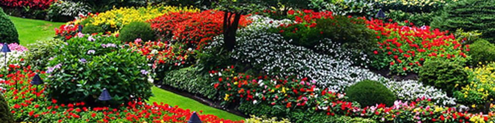 Landscaping Companies In Waterloo Region
