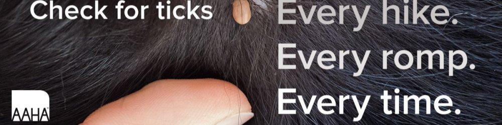 Ticks Aren't Just Gross For Dogs....