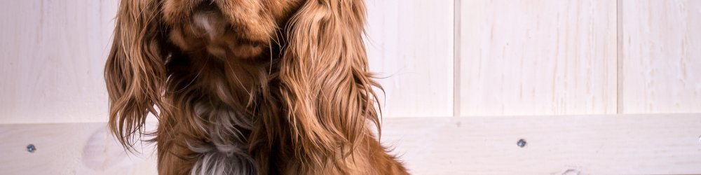 Pet Grooming Tips - Walk In Grooming Days Available