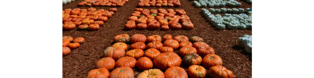 Edible Pumpkins: They Belong on Your Plate, Not Just Your Porch