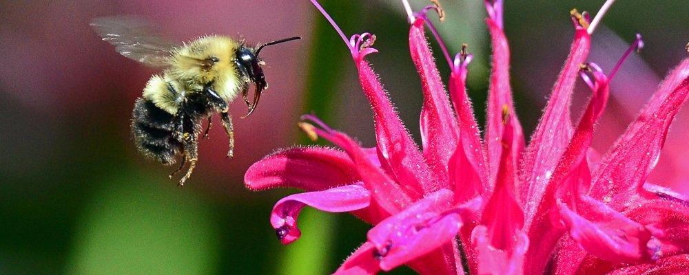 Buzy As A Bee
