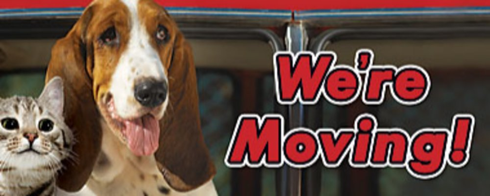Tips for Moving with Pets