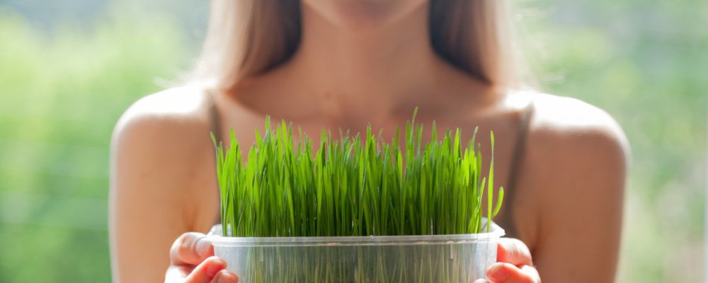 How To Guide for Growing Your Own Greens for Naturally Beautiful Skin & Hair