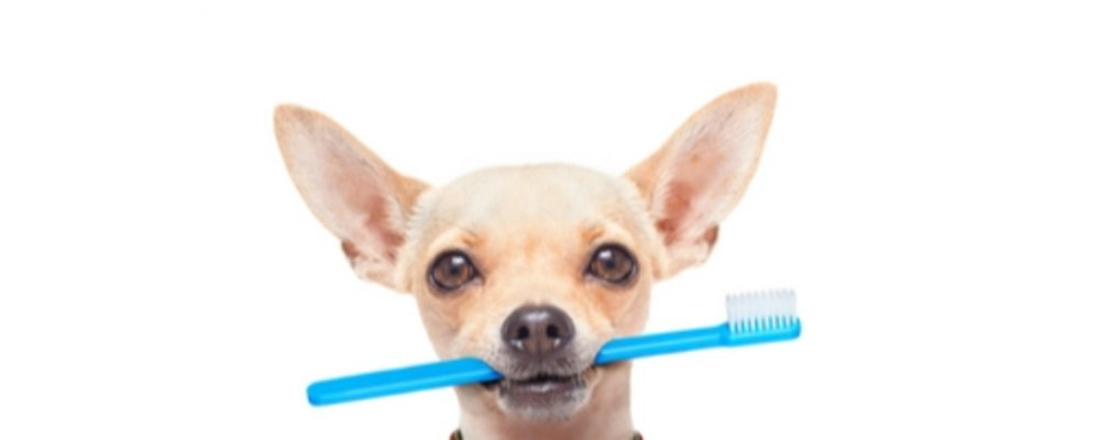 Pet Dental Days    Oct. 23 - Nov. 24th