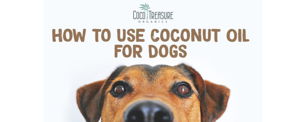 How to Use Coconut Oil for Dogs