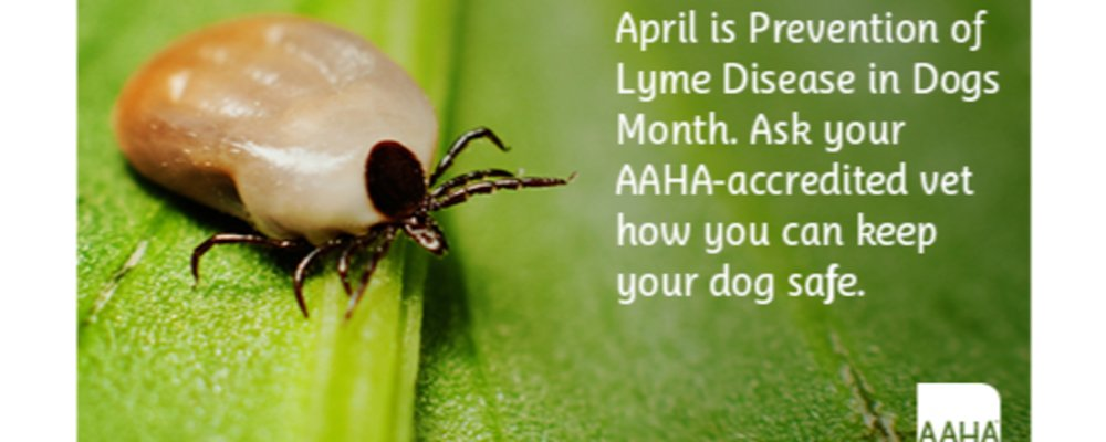 Why Tracking Lyme Disease In Dogs Is Important to Human Health