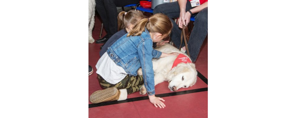 What kind of dog makes a St. John Ambulance Therapy Dog?