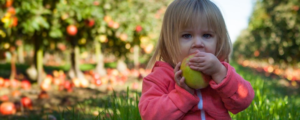 The possible link between child eating preference and brain function