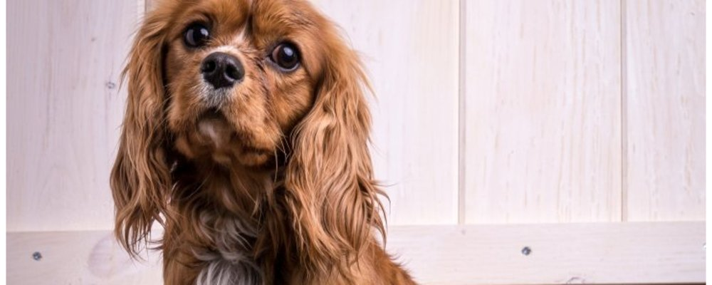Try These Pet Grooming Tips from Our 3 Groomers