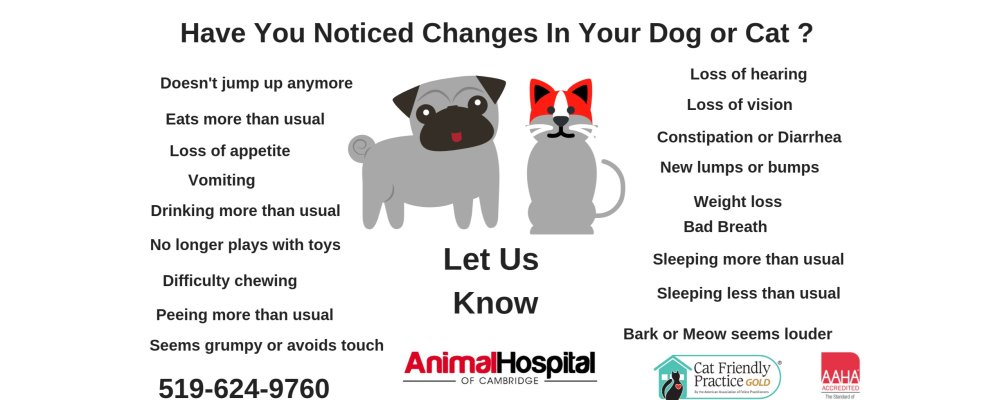 How Healthy is Your Senior Pet?
