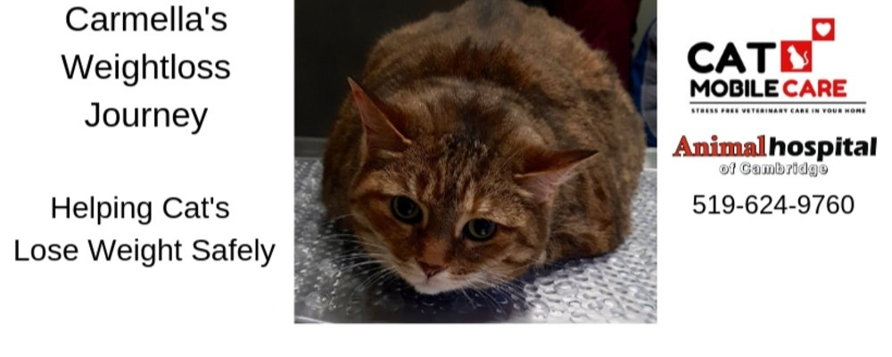 Overweight Cat : We Can Help