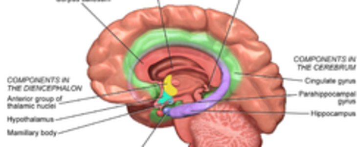 Limbic Systemrhklusster: Limbic System Location At Elf-jo.com