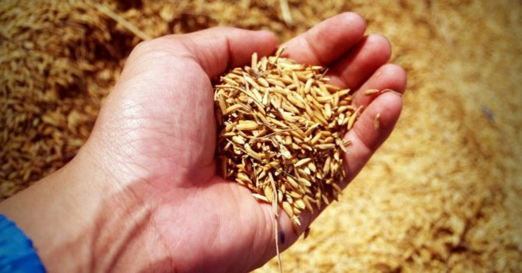 whole wheat flour, healthy owl baked goods, organic