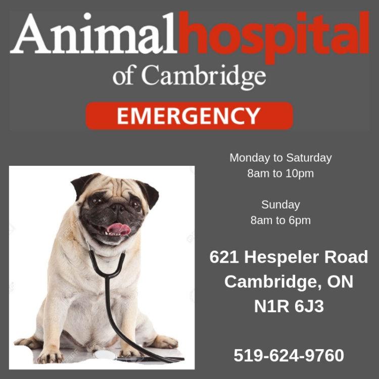 Animal Hospital of Cambridge, Cambridge vet, Vet Cambridge