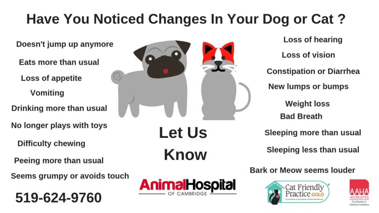 Animal Hospital of Cambridge Senior Pet Check up