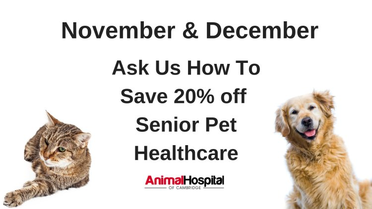 old dog, old cat, sick pet, Animal Hospital of Cambridge, senior pet