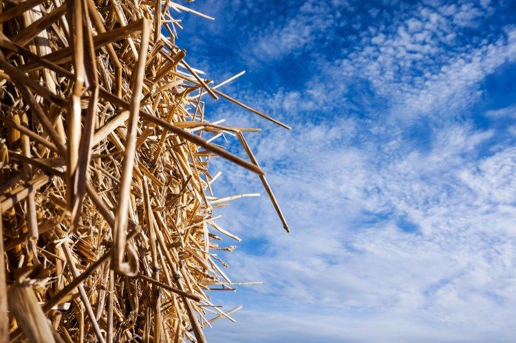 seo, needle, haystack