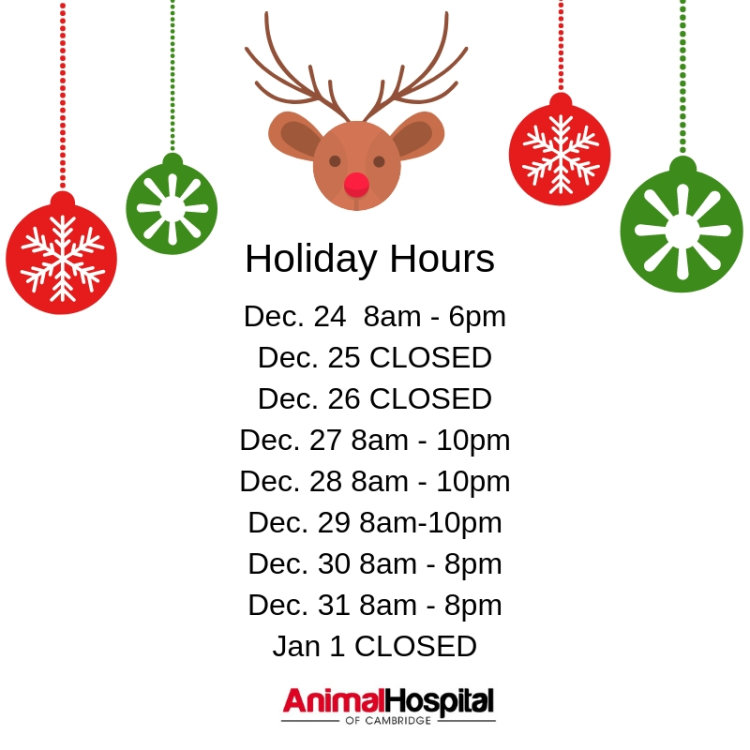 Animal Hospital of Cambridge Holiday Hours December 2018