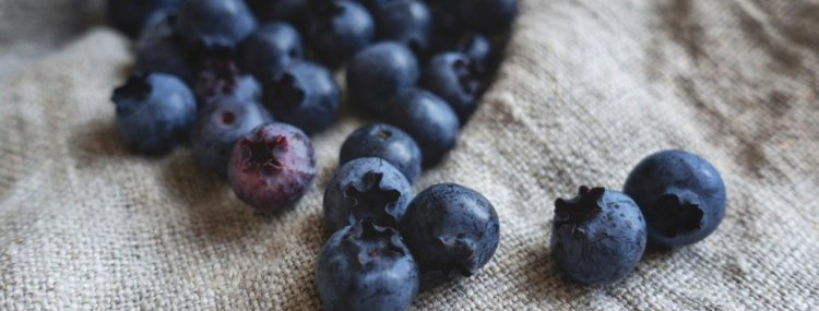 Blueberries are amazing brain foods